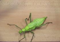 Hmyz a bezobratlí v Adamově